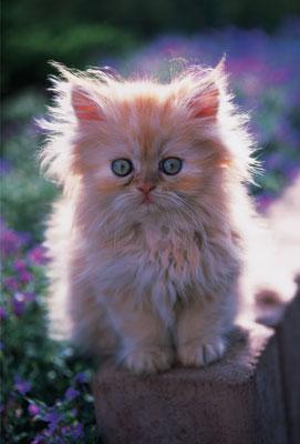 الي محبي القطط Trf15117